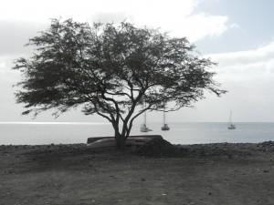 Ankarviken i Tarafal