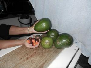 Lite avacado och dendéfrukter, som man gor dendéoljan av.
