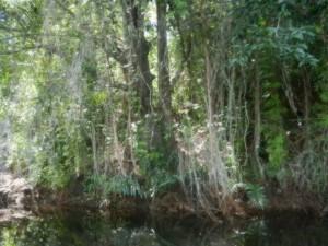Pa upptacktfard i mangrowetrasken