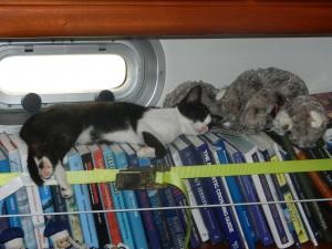 Sheena sover med mjukiskatterna fran Inger o Anders