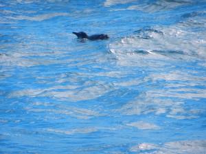 En liten pingvin som simmar förbi båten