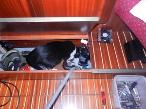 Byte av watermakerpump. Katten är alltid med när det meckas.
