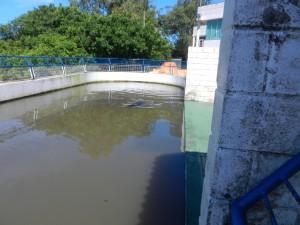 Sjölejonet Pirella i sin bassäng