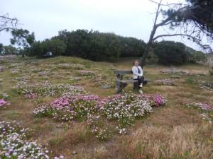 Fin blomsteräng i La Paloma