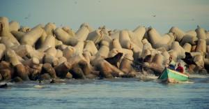 Mera sjölejon och typisk mindre fiskebåt