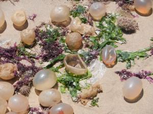 Mystiska vattenfyllda ägg som påstås vara snäckägg. Miljontals på stranden i La Paloma.