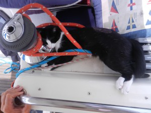 Katten lindar in sig när det gungar. Hon har ingen respekt för elvincharna.