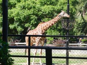BA djurpark