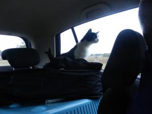 Katten spanar in landskapet som passerar