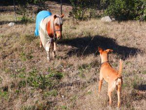 Hunden Balu har hittat en riktigt söt häst