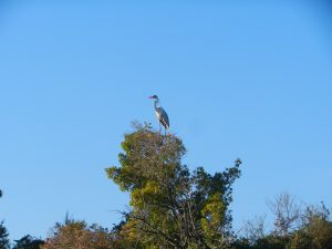 Okänd, men stor fågel
