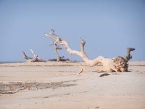 """Ett """"urtidsdjur"""" på stranden"""