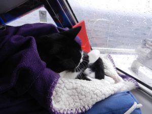 Katte ligger oftast ute nar vi seglar. Nu ar det kallt for en Brasilianska. Hon acceperar att ligga under en filt.
