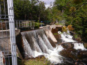 Vattenfordamning i skogen ovanfor Puerto Williams.
