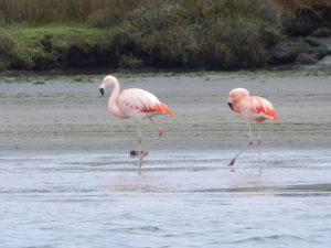 Härliga färger på dessa långbenta fåglar