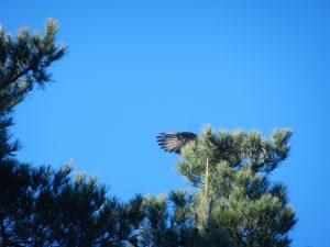 Fågel som soltorkar vingarna.
