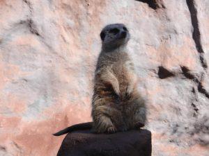 En rolig Lemur, en av mina favoriter