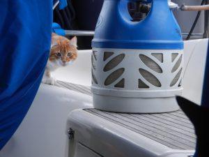 Katten Fish smyger sig på våran båt.